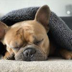 ペット可物件に置くと効果的なペット用インテリアエレメンツ